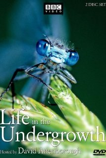 Watch Life in the Undergrowth Online